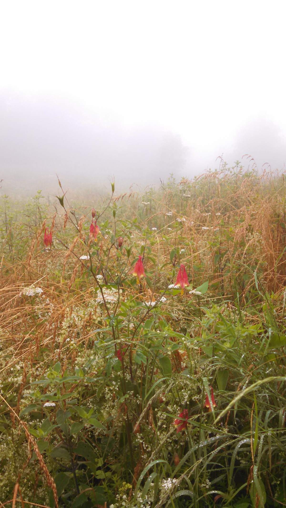 Appalachian Trail Run