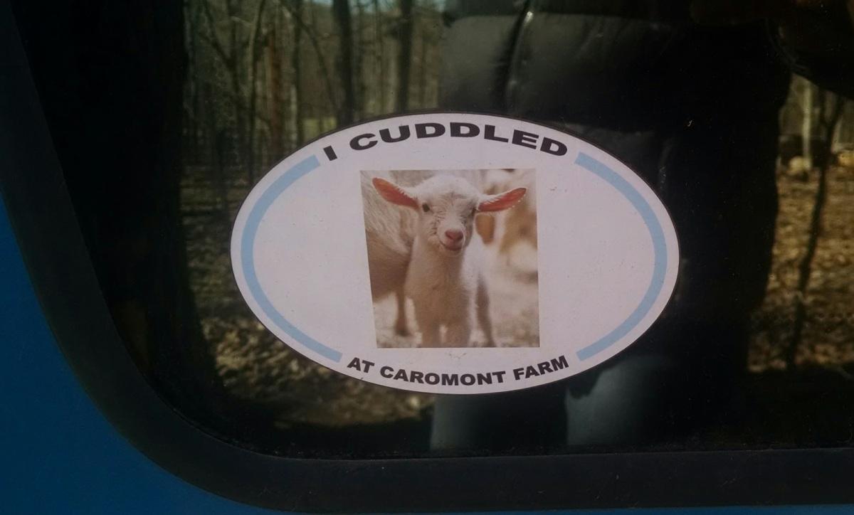 Goat Cuddling at CaromontFarms
